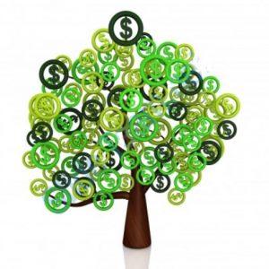 money-tree-300x300
