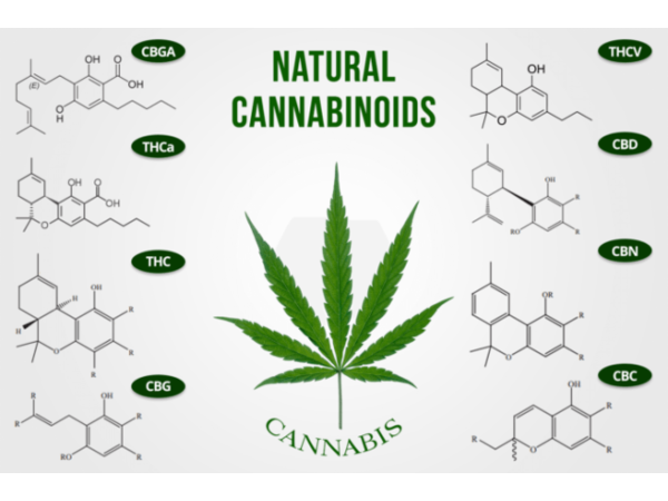 cannabis-capitalist-radio-terpenes-and-terpenoids-and-cannabinoids_thumbnail.png
